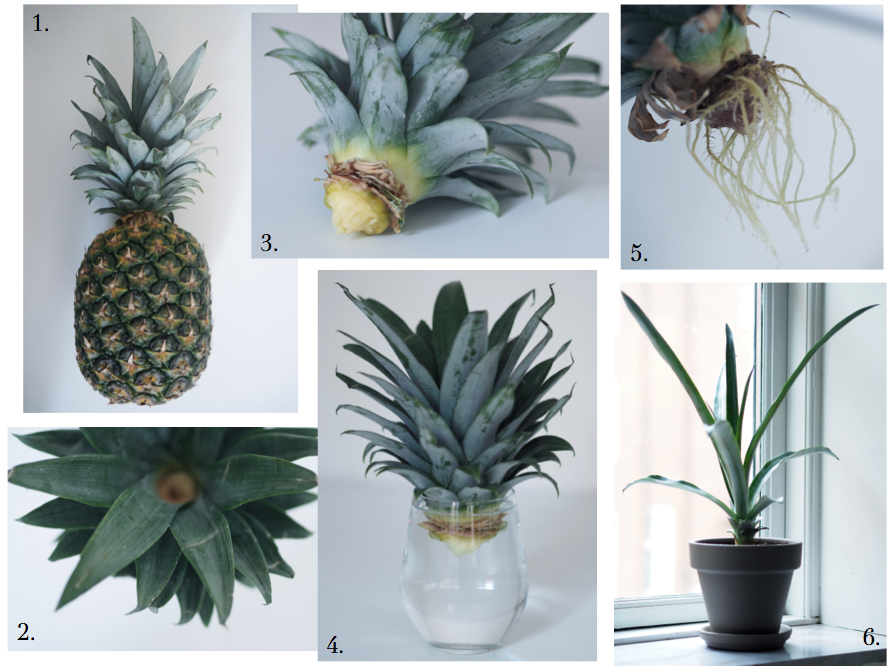 DIY pinapple tree