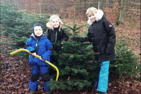 Vores årlige juletræsfældning!