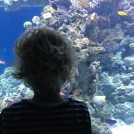 Anton ved akvarie