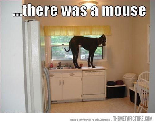 funny-scared-dog-mouse