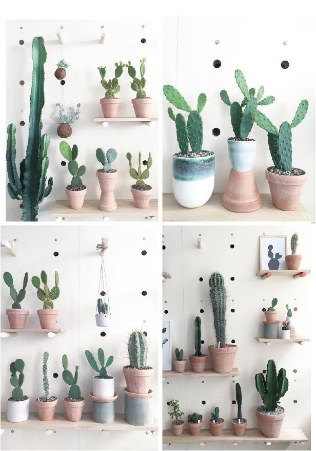 kaktus rigtig