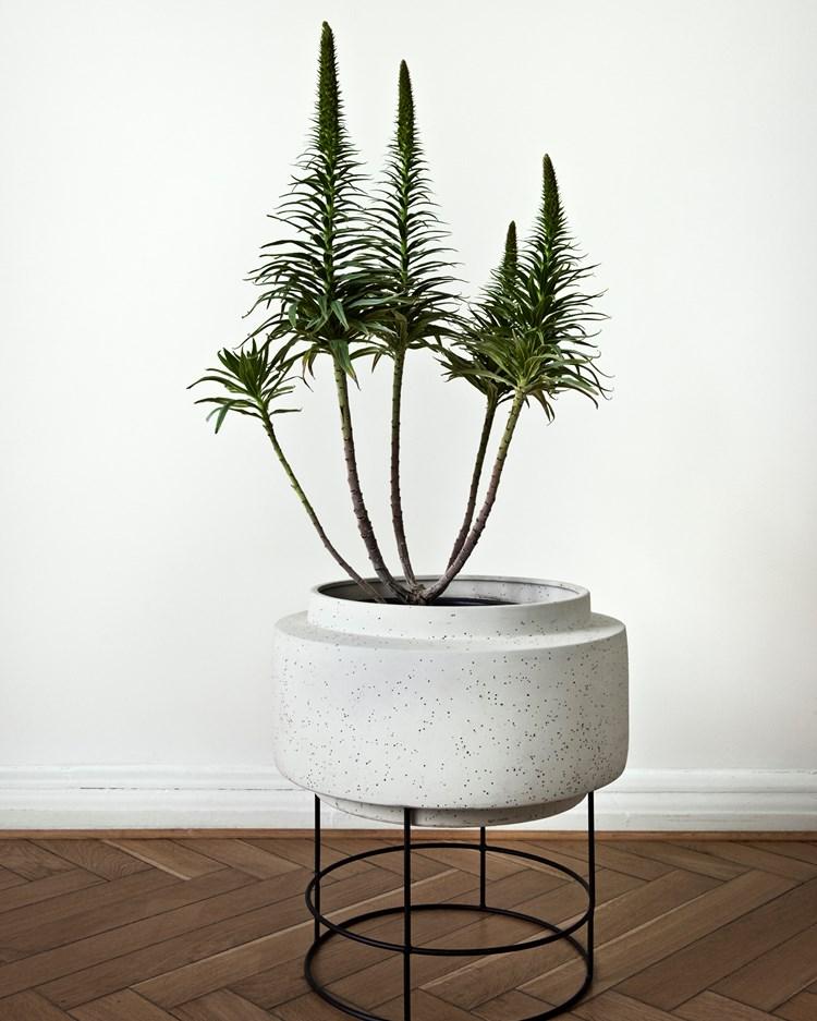 botanique-living