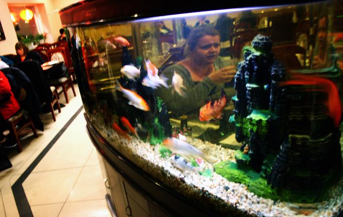 Amager Wan Hao akvarium amarOrama