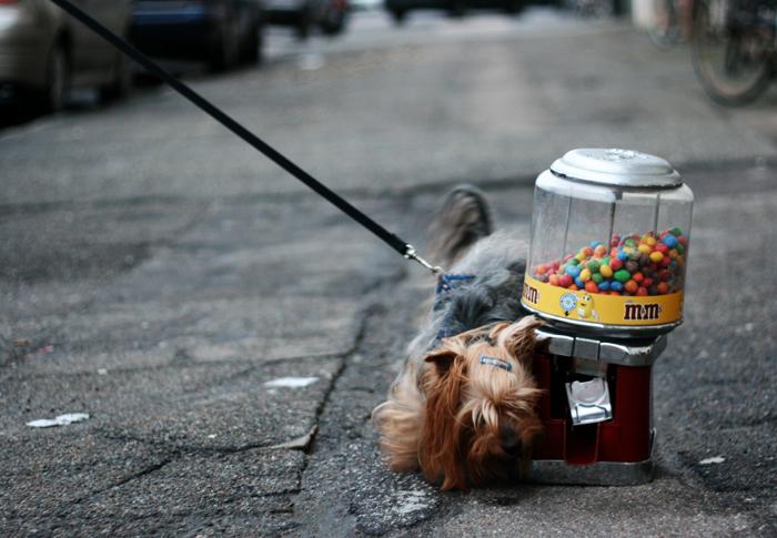 Hund amarOrama Amager Lillegrund
