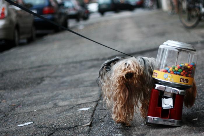 Hund tisser amarOrama Amager Lillegrund
