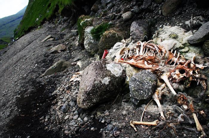 Skelet Saksun amarOrama