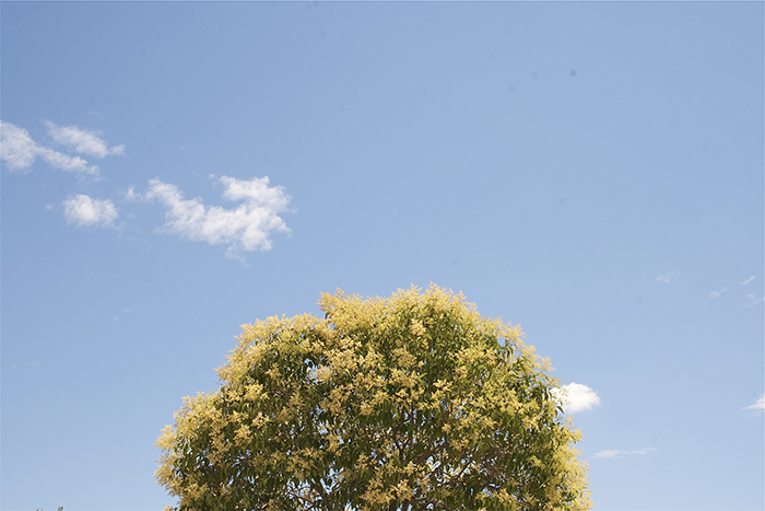 IMG_0244a_700