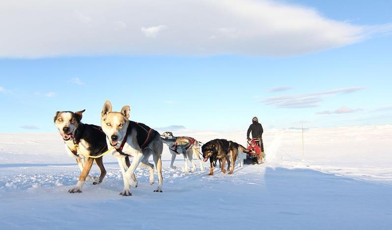 Hundeslæde i Geilo, Norge