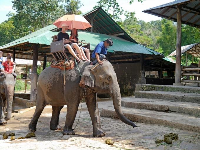 Elefantridning til artikel om dyremishandling