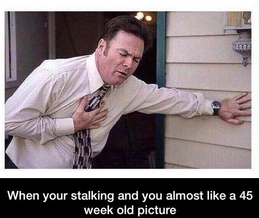 stalk1 (1)