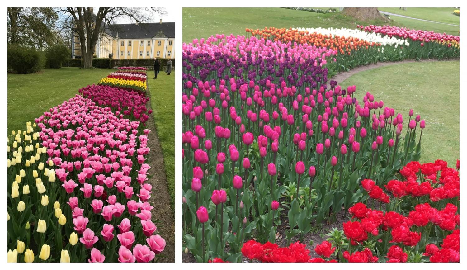 Tulipanfestival på Gavnø