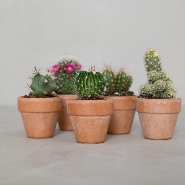 mini-kaktuspakke_greenify-600x600