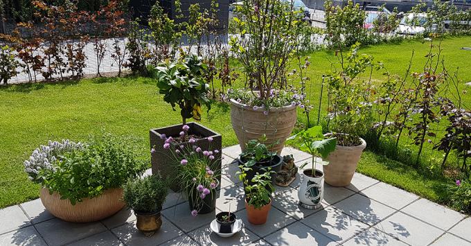 vækst i haven